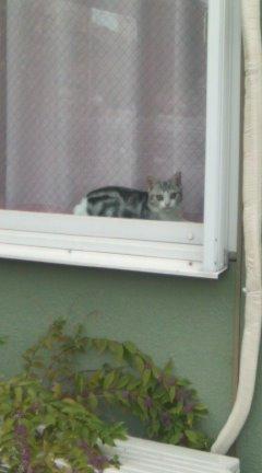 近所で見かけた、かわいい子